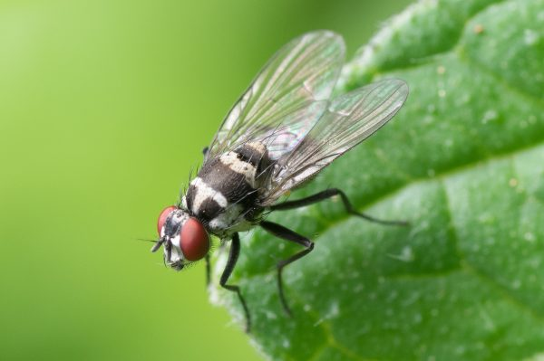 Essential Oils for Fruit Flies