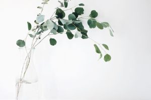 Eucalyptus Oil for Acne & Acne Scars 1