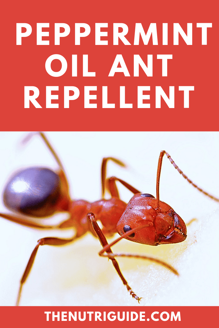 peppermint oil ant repellent