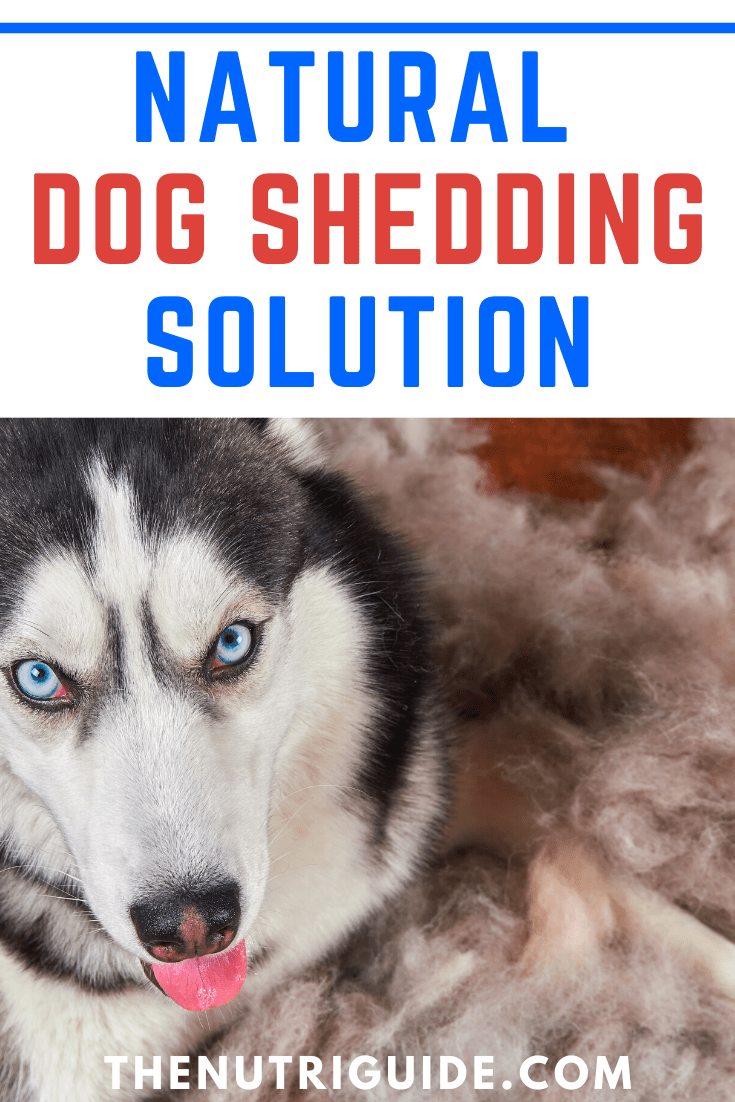 Natural Dog Shedding Solution
