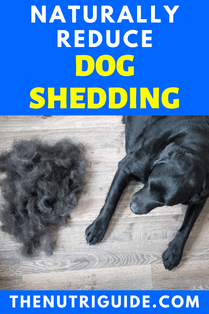 Naturally Reduce Dog Shedding