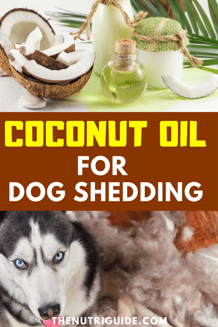 coconut oil for dog shedding