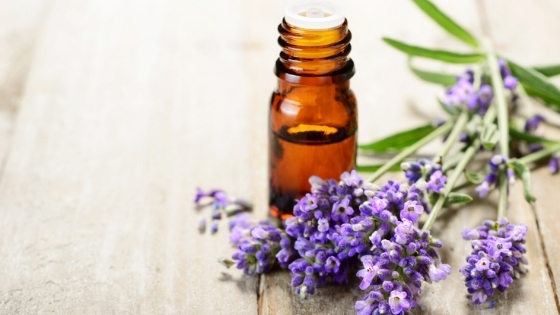lavender oil for ringworm