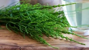 horsetail oil for hair benefits