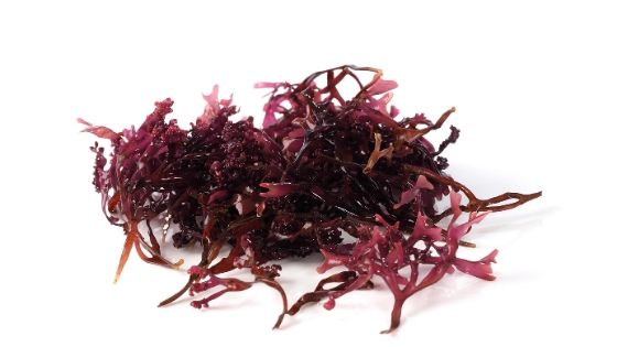 Irish moss (Sea Moss) for hair benefits